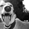 ほっぺたから膿が!重要な犬のデンタルケア