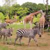 【横浜の動物園ズーラシア完全ガイド】効率の良い回り方・割引情報・見所まとめ