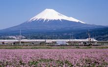 昔は川越え、今は飛行機で?東海道の宿場町・静岡県島田市の魅力を英語で語ろう!