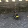 旅先動物シリーズ14  バリの野猿