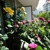 薔薇のベランダー
