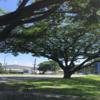 語学学校訪問記: HELP CLARK