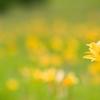 世界に一つだけの花