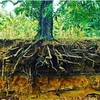 20代は肥沃な土壌づくり∞133