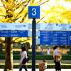 秋を感じるために昭和記念公園に行ってきた!!