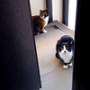 三毛猫「三色丼」と白黒猫「ちびゴン」が仲良く登場