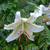 低山の花たちは・・
