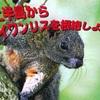 【ニュース】 浜松城公園がタイワンリスだらけ【浜松市】