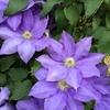 4-41   愛すべき花たち〜令和最初の種蒔き終了〜