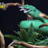 【閲覧注意】ネズミを食べるヘビ