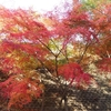 那須烏山で紅葉と滝を楽しむ、おすすめドライブコース。(2009年11月の旅行記)