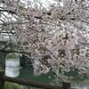 加治川治水記念公園の桜2011年春