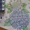 完成☆アジサイを透明水彩で塗ってみた・花日和花だより