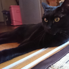 今日の黒猫モモ&白黒猫ナナの動画ー1046