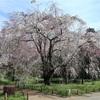 多摩川桜百景 -47. 都立神代植物公園と深大寺-