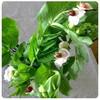 豆の花ブーケ