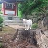【海の見える伊豆山神社】ネコの行く先案内人