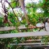 お庭で果物収穫!!