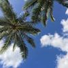 #5 ハワイ旅行記 2015-16年 大晦日はワイキキで過ごしました!