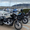 天気の良い日曜日、道の駅伊東マリンタウン〜城ヶ崎海岸までツーリングに行ってきました #バイク #ハーレー #ツーリング #バイク大好き