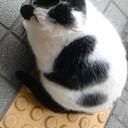 上京リーマンの徒然日記