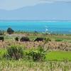 小浜島シュガーロード池群(沖縄県小浜島)