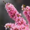 赤松町の春の花