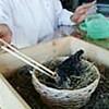 巣が壊れたツバメのひな育てる(栃木県)
