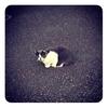 猫。スイーツ。ランニング。