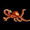 タコという進化を語る上で大変興味深い生き物【タコという生き物への考察①】