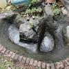 ウチの池版「池の水ぜんぶ抜く大作戦」