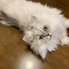 最近の猫の困りごと・・・・。