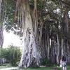 ハワイの歴史を感じるヌアヌパリにある秘密のビュッフェ「ゴヴェンダズビュッフェ」でランチしました。