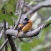 夏鳥と冬鳥の交差点