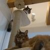 キャットタワーをリニューアル、さて猫の反応は?