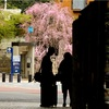 今年も桜を撮ろう