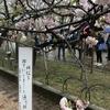 大阪/『造幣局 桜🌸の通り抜け 2017』を見に行ってきた❗️