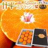 【ヒルナンデス】1/22 糖度13度の1級品 シャキシャキプチプチ『愛媛Queenスプラッシュ』お取り寄せ