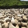 羊のこととか、海外のこととか、そんなものをチョロチョロ書いていくと決意。