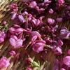 桜の塩漬けをつけると思い出すこと。旅だった旦那さんのこと。