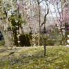 城南宮で枝垂れ梅を撮って来た2017