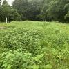 Tommy 2020 草刈リンピック 第三種目:バロネスによる丸山城本丸とうちの裏の空き地の草刈り