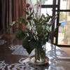 雑草❓お花です。