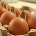 【オーストラリア】卵にサルモネラ菌!食べる前に対象のものかどうか確認してみよう、リコールされた卵のブランド