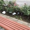 ここのところ同じエリアを毎朝掃除し続けているのにゴミが減らない