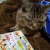 ニャンコ丸は唐の国の仙猫…らしい💦 真ん丸でブサイク…ブサかわ。「うちのにゃんこは妖怪です」 #感想 #読了 ( @book_cham さん)