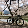 Zwift - ' Hironobu(Shamisen R)'s Meetup / ロードバイク - 花見サイクリング