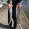 千葉県富津沖で太刀魚テンヤ釣り