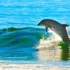 日本でイルカウォッチング 熊本・長崎から野生のイルカに会いに行こう