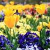 春を満喫!ピクニックにも最高!!栃木県壬生町の『とちぎわんぱく公園』に行ってみた